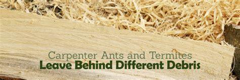 termites  carpenter ants      steve