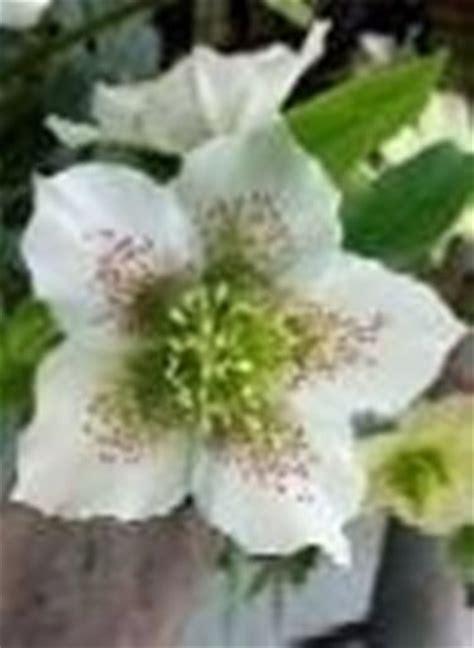 fiori invernali per matrimonio fiori x matrimonio d inverno domande e risposte fiori