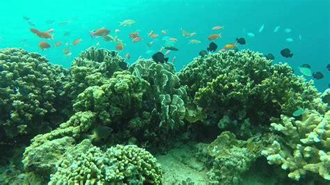 Gopro 3 Indonesia by Snorkeling In Gili Trawangan Lombok Indonesia Filming