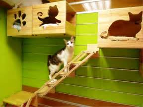 design works home is where the cat is indoor cat house pet house design pinterest cat