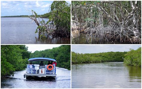 everglades boat tours national park exploring everglades national park with kids the world