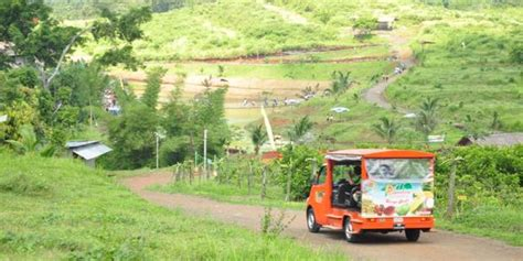 Bibit Buah Naga Merah Kabupaten Kendal Jawa Tengah kebun buah agro wisata ngebruk patean di kendal jawa tengah