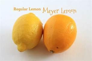 st germain meyer lemon cocktail
