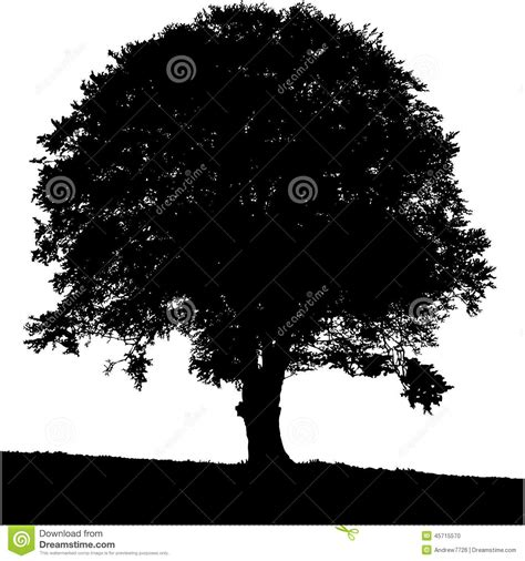 trees silhouettes stock illustration image of color 43384093 tree silhouette black white colors stock illustration image 45715570