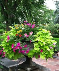 Sweet Potato Vine Flowers - building a dream house front porch container gardens