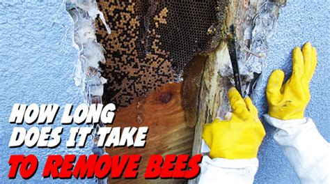 how long does it take to remove a small tattoo how does it take to remove bees bee best bee removal