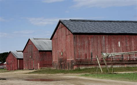 Tobacco Shed Ct by Tobacco Barn In Rural Connecticut Photograph By Brendan Reals