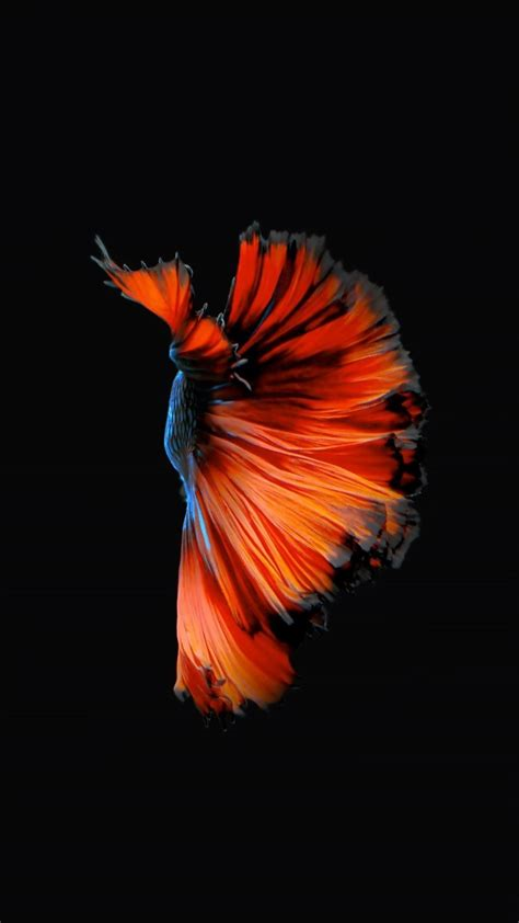 apples  fish wallpapers