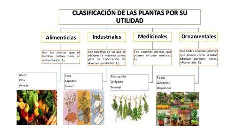 la utilidad de lo clasificaci 243 n de las plantas seg 250 n su utilidad
