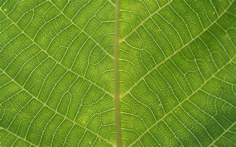 texture leaf pattern green leaf download photo texture green leave texture