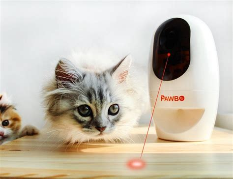 pet cam pawbo wi fi pet cam and treat dispenser 187 gadget flow