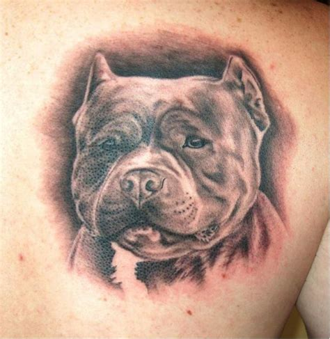 pitbull tattoos 4 pit bull on back shoulder pictures designs