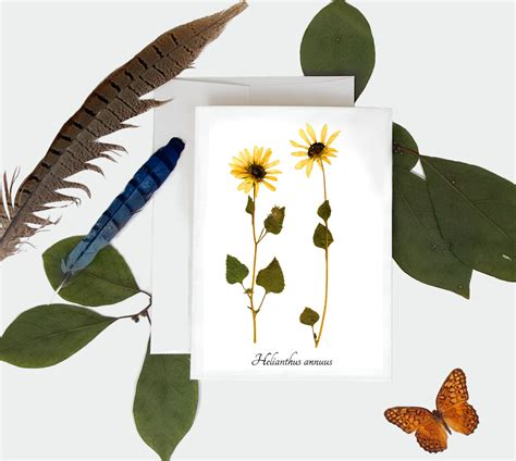 Vegetable Planterbag Sunflower Print sunflower botanical card pressed plant print greeting card