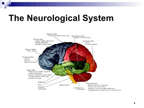 the neurological system 2 neurological 5 components