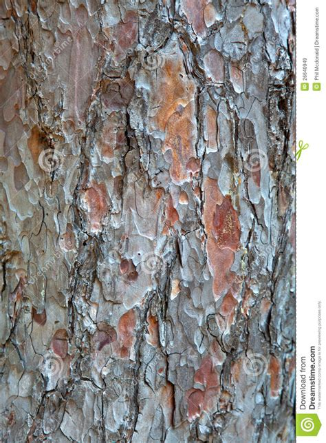 pine bark texture royalty free stock images image 26640949