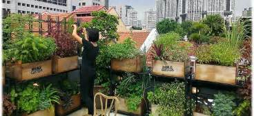 How To Start An Urban Garden - roof garden ideas