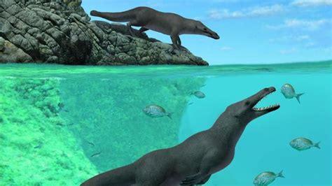 fosil paus berkaki empat ditemukan  peru