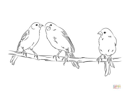 coloring pages canary bird canary coloring page coloring home