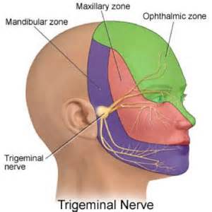 Assessment of the cranial nerves nursing nur307 with reily at