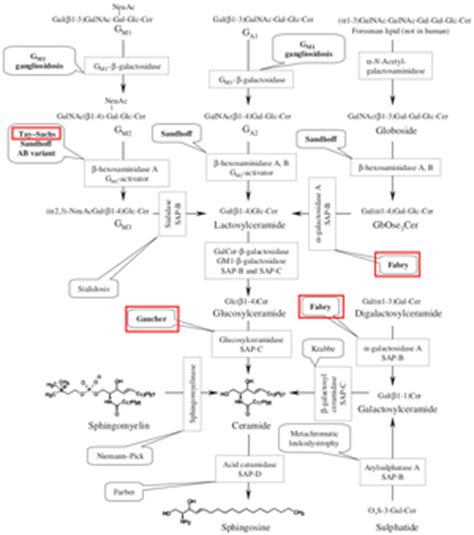 Simply Munchen 1 Cr lysosomal storage disease pathway pictures to pin on