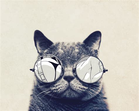 1280x1024 wallpaper cat 1280x1024 round glasses cute cat desktop pc and mac wallpaper