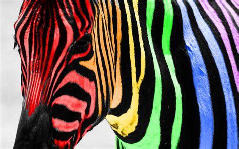 imagenes de uñas de cebra cebra de colores 1680x1050 fondos de pantalla y
