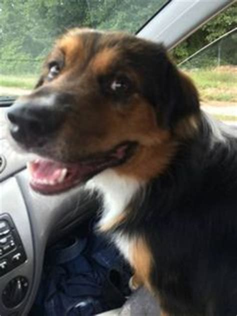 found dogs near me 1000 images about found dogs ga on zip code pet names and