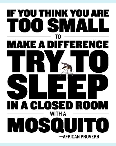 where do mosquitoes hide in your room image african proverb getmotivated