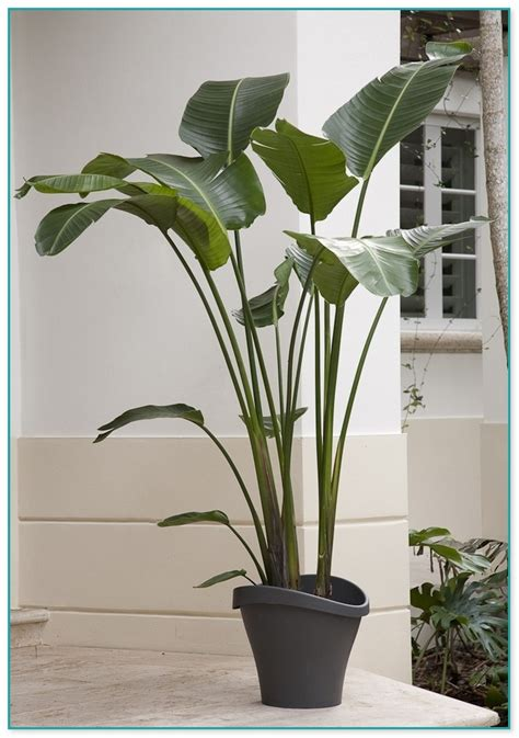 common house plants large tropical house plants for sale