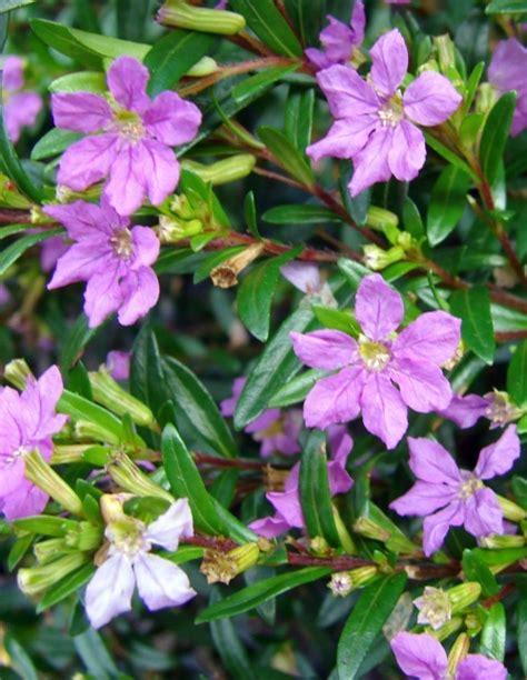 small flower plants popular easy flowering plants
