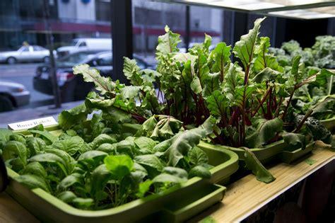 Faire Pousser Legumes Interieur by 73 Aliments Que Vous Pouvez Faire Pousser Dans Des Pots 224