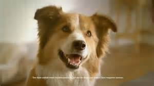 can dogs tv dogs in tv ads search engine at search