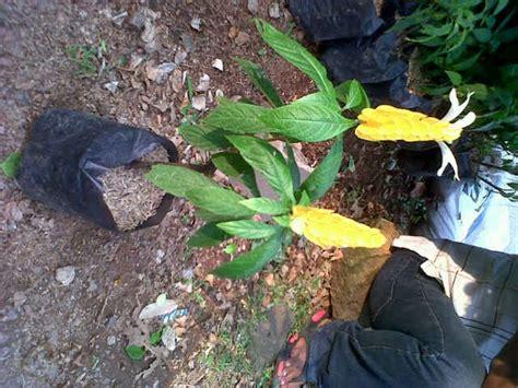 fadhil floras pohon perdu kecil