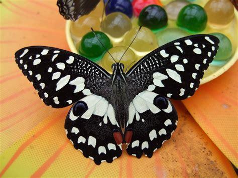 casa delle farfalle bordano orari con i bambini alla casa delle farfalle co alberghi