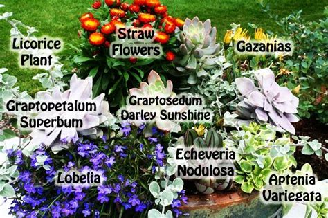 garden plants names and pictures 17 best images about garden on gardens names