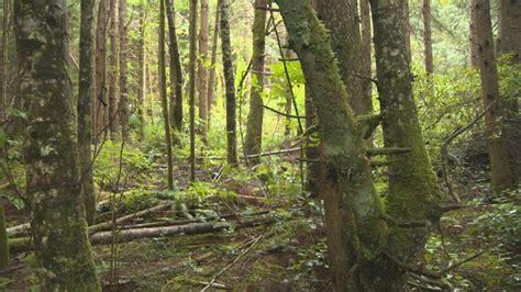 eerie bizarre howls spark sasquatch hunt  remote
