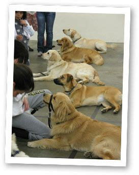 how to a service for autism best 25 autism service dogs ideas on service dogs autism services and