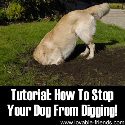 how to stop my from digging how to stop your from digging lovable friends
