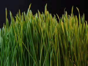 file grass dsc08672 nevit jpg