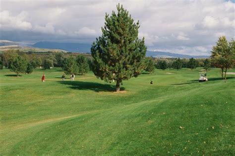 growing grass   plants  pine trees