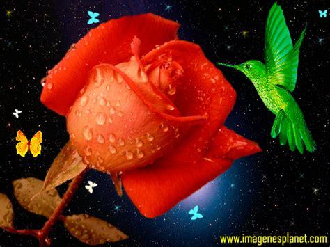 imagenes romanticas movimiento imagenes en movimiento para celular buscar con google