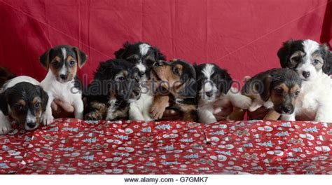 battersea dog house battersea dogs home london stock photos battersea dogs home london stock images alamy