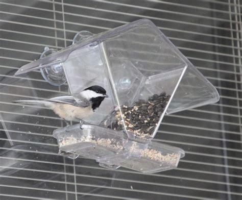 tales from my window bird feeder northwest picturemaker