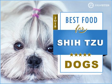 recommended food for shih tzu top 6 recommended best foods for a shih tzu