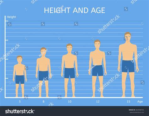 average height height age boys average height children stock vector 364598792