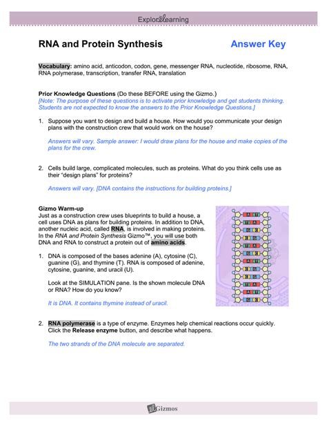 section 12 3 rna and protein synthesis pages 300 306 dna rna protein synthesis worksheet answers khafre