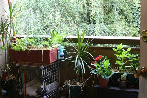 Gardening On A Balcony Apartment Gardening Living In The O