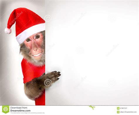 monkey santa monkey santa claus holding banner stock