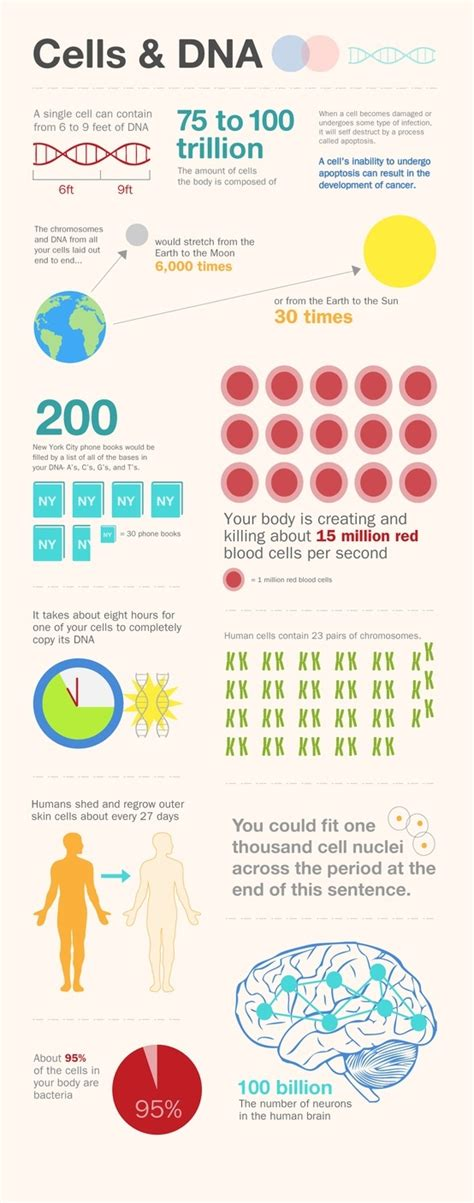 Rna Eye 2 5 Gr cells dna facts poster infografia infographic