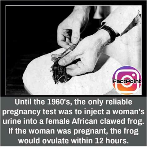 FactPoint Until the 1960's the Only Reliable Pregnancy ...